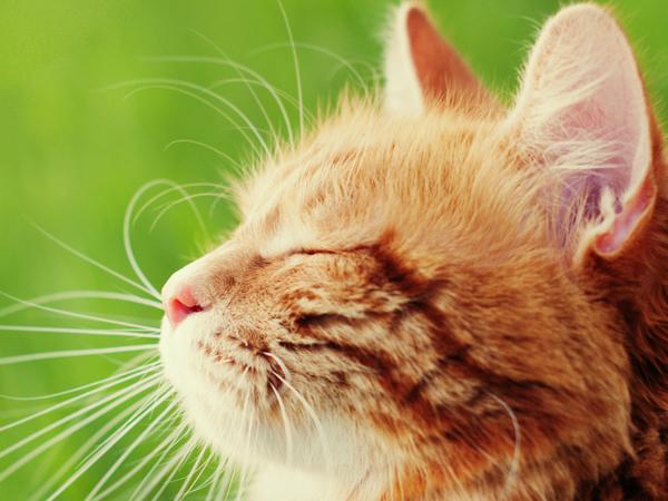 猫の口コミ一覧ページ