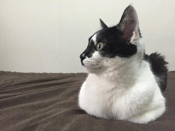 ミックス猫、ゆいちゃん