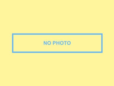 ペット保険口コミ-ペット画像-nophoto