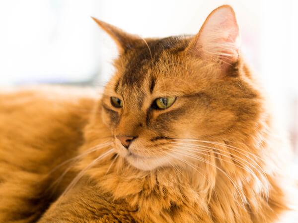 猫の老年期とペット保険 eyecatch