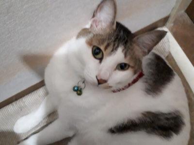猫・ミックス、チャッチャ君のペット保険口コミ画像