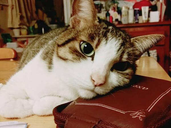 ミックス猫、いちこさんの口コミ画像