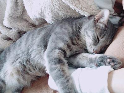 ミックス猫、1歳、まめたくん