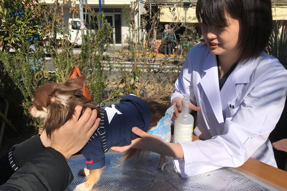 アニコム獣医師によるペットの体脂肪測定