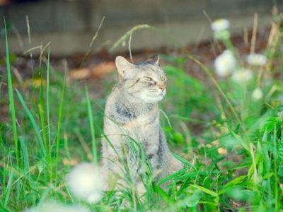 ミックス猫、5歳、つっぷしさん