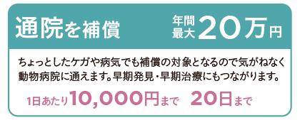 通院を補償 年間最大20万円