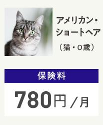アメリカンショートヘアー(猫0歳) 保険料780円/月