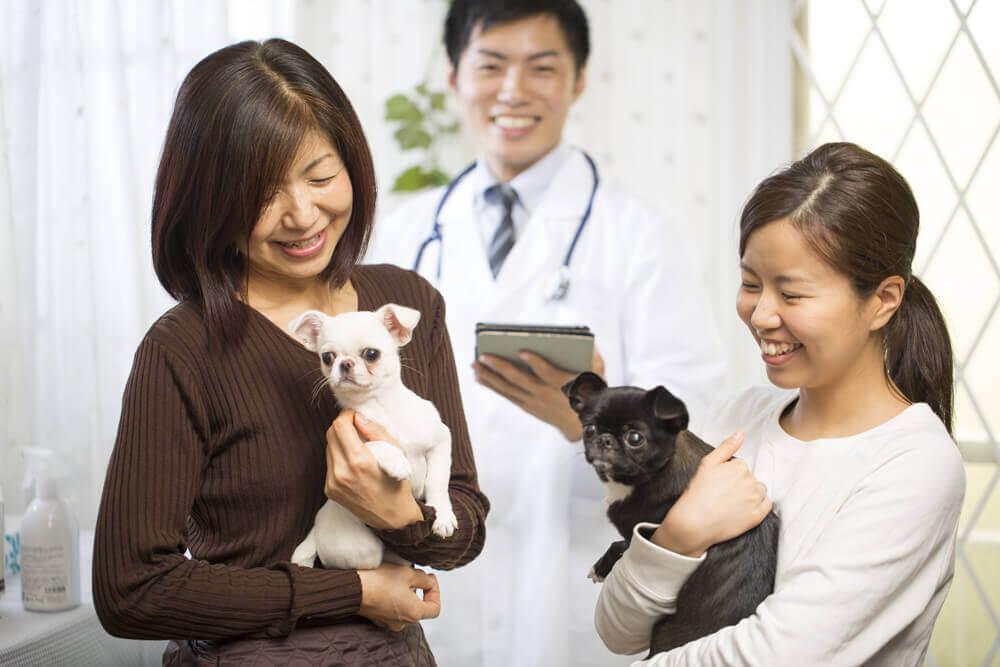 改正動物愛護法の改正ポイントについて。