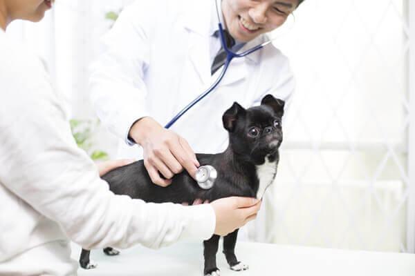 改正動物愛護法-写真2