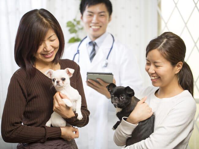 改正動物愛護法の改正ポイントについての解説