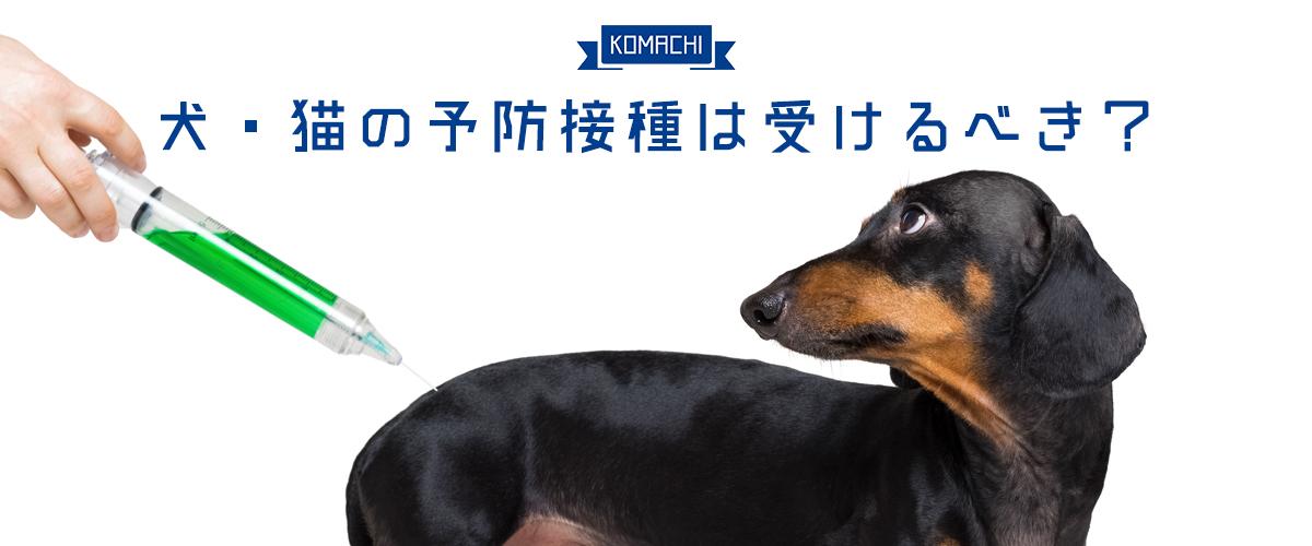 犬・猫の予防接種は受けるべき?