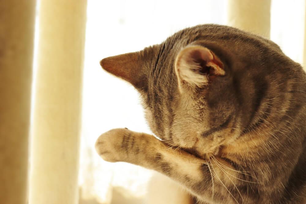 花粉症で目がかゆい猫