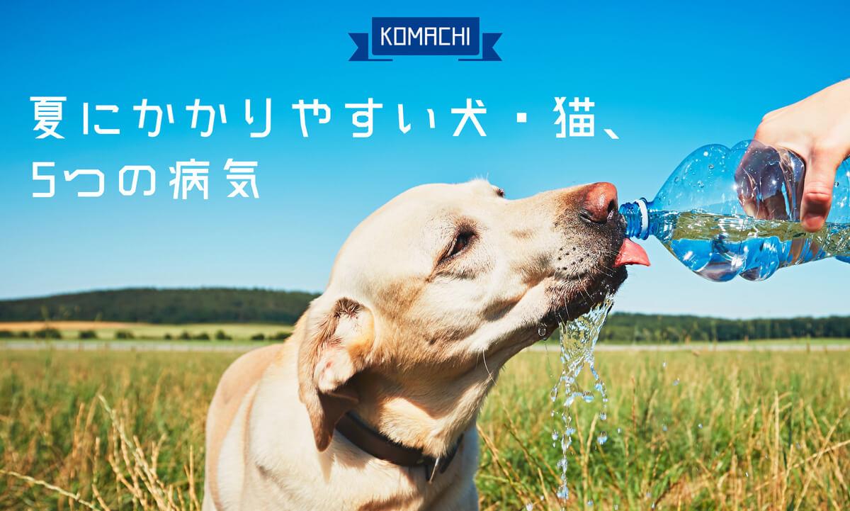 夏にかかりやすい犬・猫の5つの病気