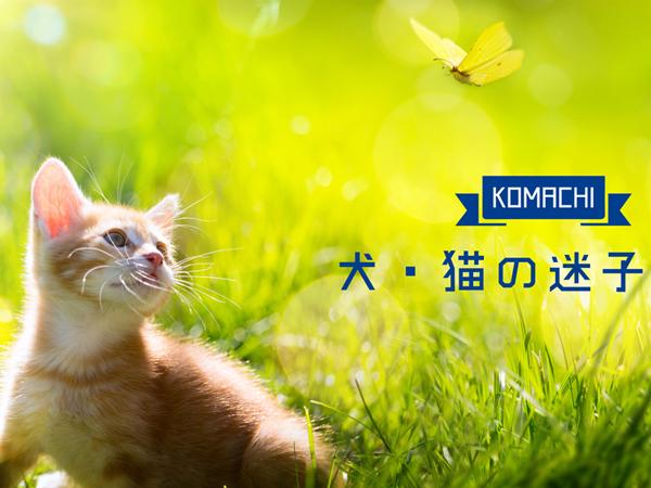 犬・猫の迷子特集・サムネイル