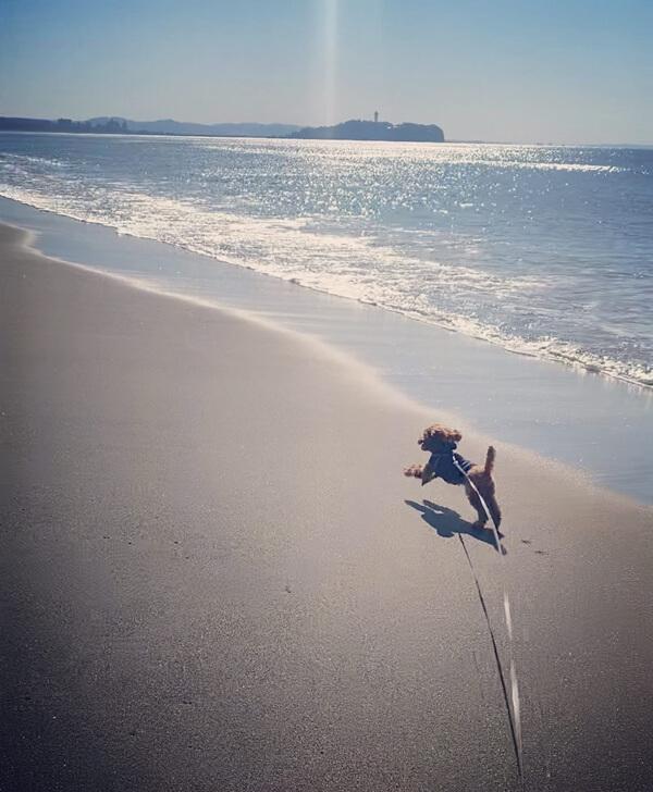 茅ヶ崎の海とトイプー・マイロ君